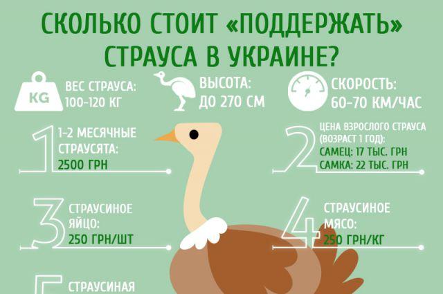 Сколько стоит «поддержать страуса» в Украине