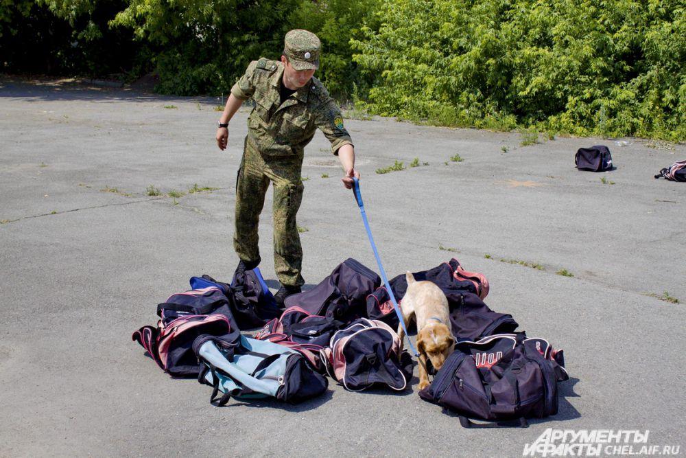 Поиск «наркотиков» осложняется тем, что в каждой сумке лежит что-то интересное и ароматное.