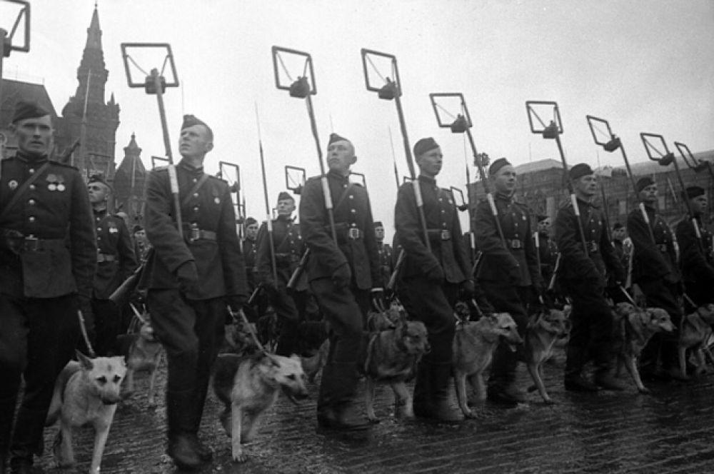 Минеры с собаками минно-розыскной службы на Параде Победы