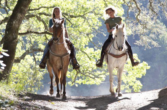 Лучший способ борьбы со стрессом - конная прогулка.