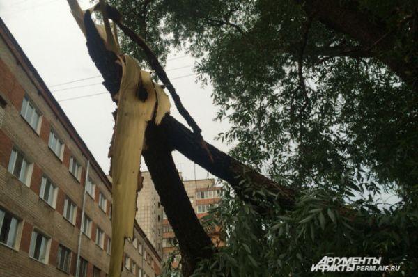 Сломанные ветки можно увидеть почти повсюду