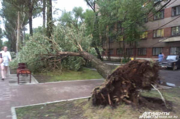 На бульваре Гагарина деревья выкорчевало с корнями