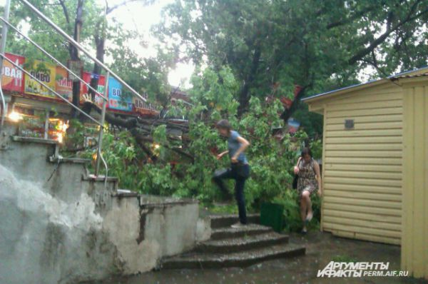 Сломанные деревья в районе автовокзала