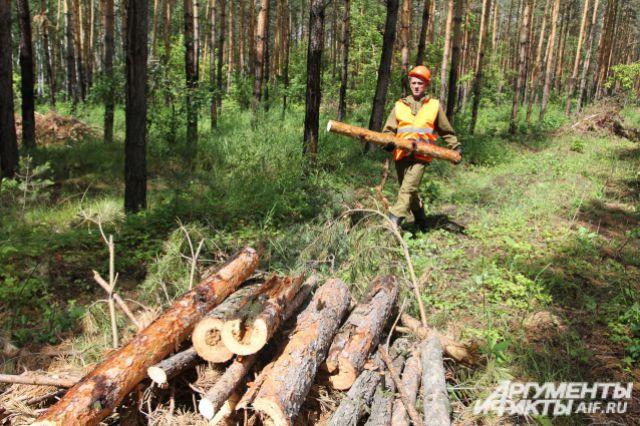 Черные лесорубы: нелегальной продаже леса поставят заслон