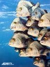 Иногда, чтобы сделать удачный снимок, Скерри приходится проводить под водой по несколько часов. Результат того стоит.