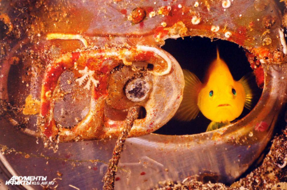 От объектива камеры Скерии не ускользает ни один морской обитатель.