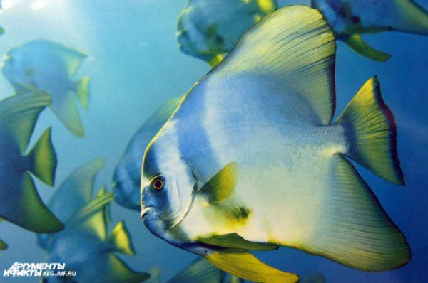 Скерри славит красоту природы моря.