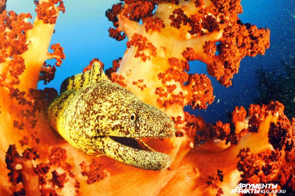 Таинственные обитатели глубин наполняют объектив необычными формами и цветами.