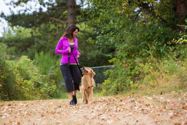Как подготовить свою собаку к пробежкам?