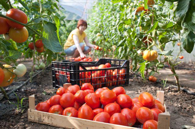 На развитие сельского хозяйства государство выделяет гранты, субсидии, но пока этого недостаточно.