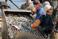 Рыбаки доставляют на берег свежую рыбу.
