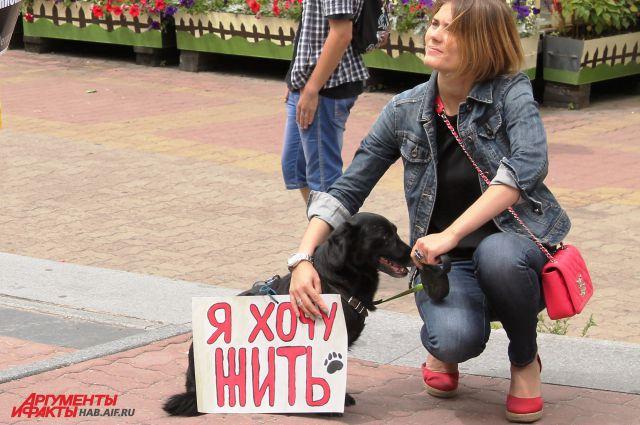 Хабаровские зоозащитники не раз призывали отказаться от убийства бездомных животных