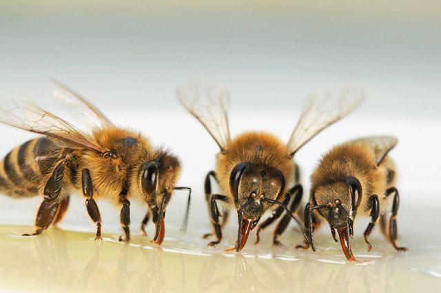Жителя Екатеринбурга почти до смерти искусали пчелы
