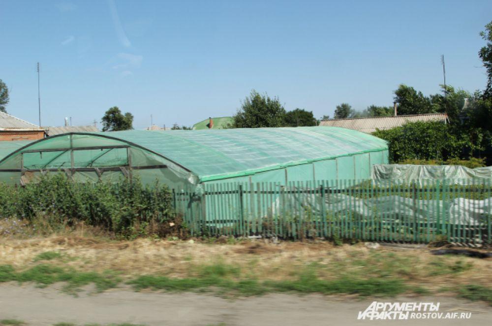 Практически у каждого жителя Багаевского района во дворе есть свои теплицы, где они выращивают огурцы.