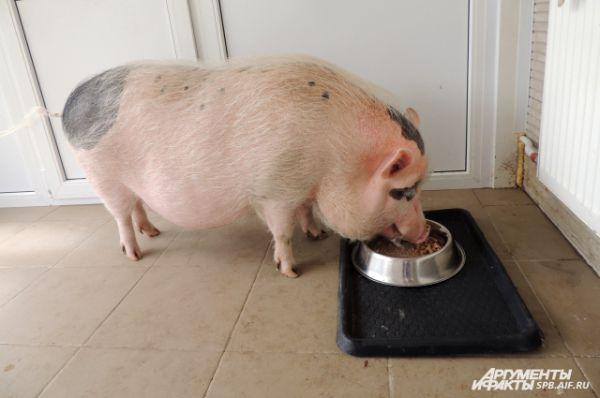 Хозяйки дают животным соевое мясо и другие продукты, содержащие белок.