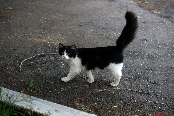 Рядом с домом бегают домашние животные.