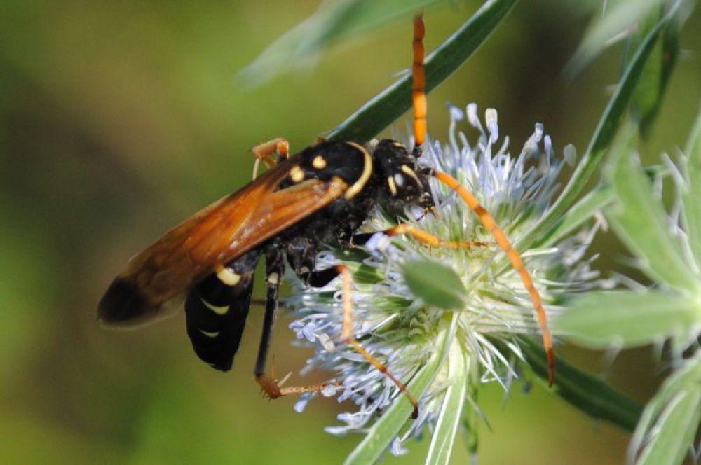 Что за насекомое - не знаю. Но, по-моему, красиво.