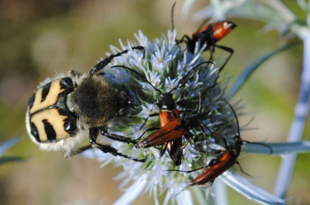 Разнокалиберные жуки.