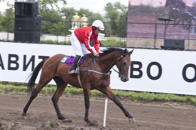 Турнир по конному спорту пройдёт на омском ипподроме.