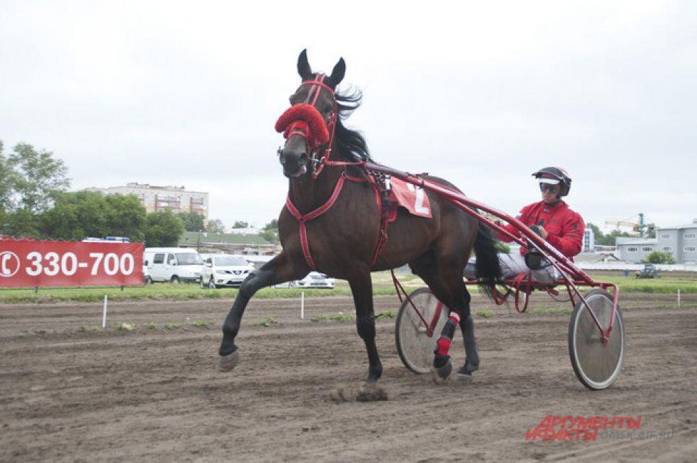 В Омске прошёл конный турнир «Большой сибирский круг».