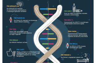 Как гены влияют на жизнь человека? Инфографика
