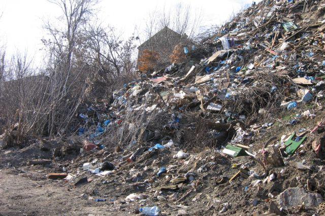 Экологическим воспитанием населения займутся в Новосибирске