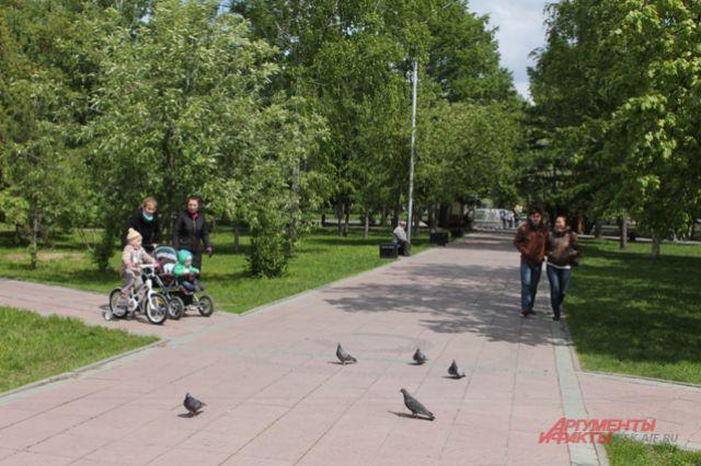 В Нарымском сквере в Новосибирске высадили 120 деревьев