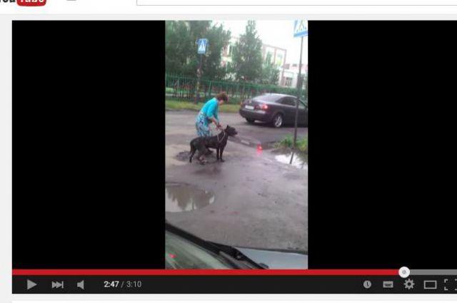 Хозяйка вывела выгуливать пса без намордника.