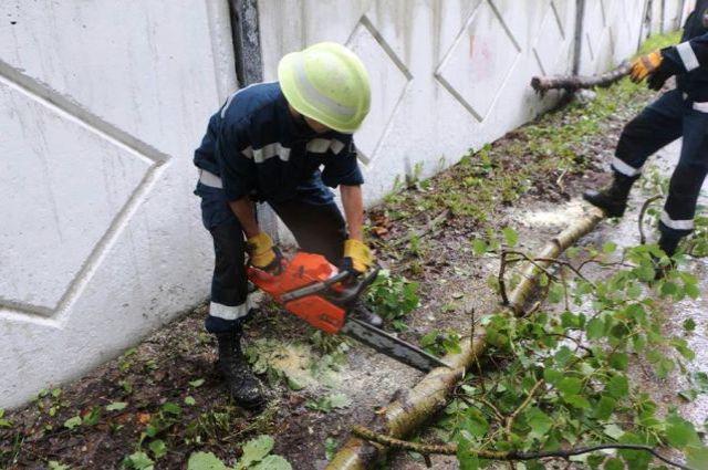 Спасатели убирают дерево, которое повалил недавний тайфун