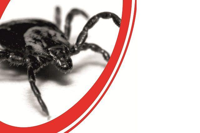 Более пятидесяти уральцев заболели клещевым энцефалитом