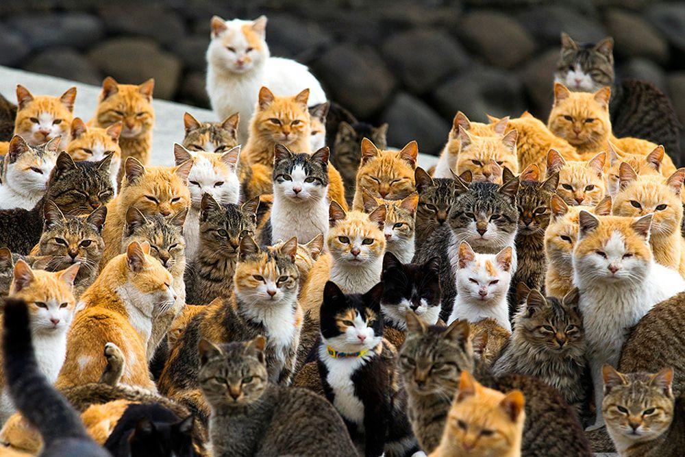Кошки на острове Аошима в префектуре Эхиме. Япония, 25 февраля.