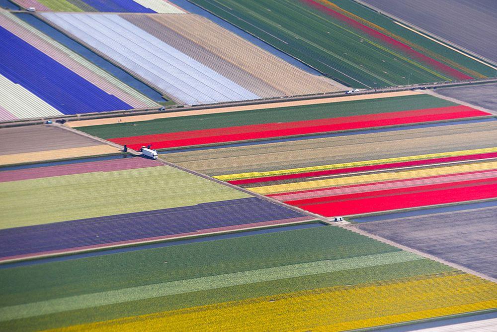 Поля королевского парка цветов Кекенхоф, также известного как Сад Европы. Лисс, Нидерланды, 15 апреля.