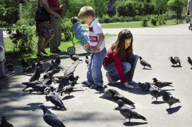 Подкармливать голубей - дело небезопасное.