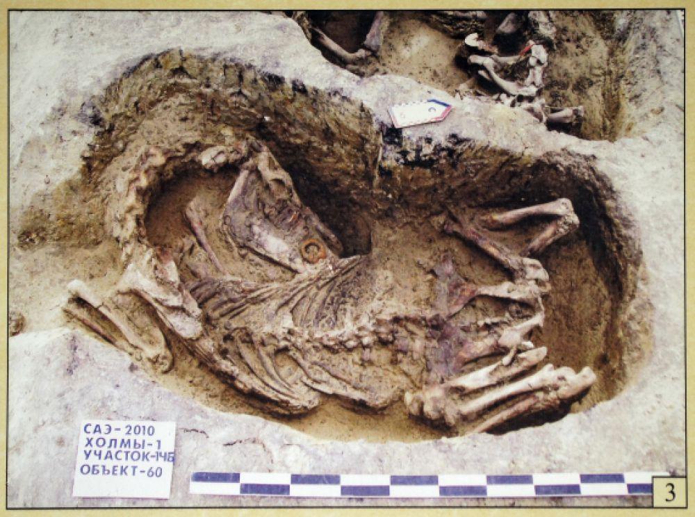 Лошадь занимала большое значение в жизни пруссов. Своих умерших они хоронили вместе с боевыми конями.