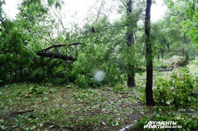 Предыдущий тайфун повалил в Хабаровске полторы тысячи деревьев