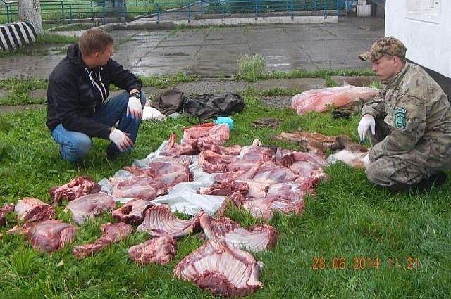 Браконьеры уже успели разделать убитого лося.