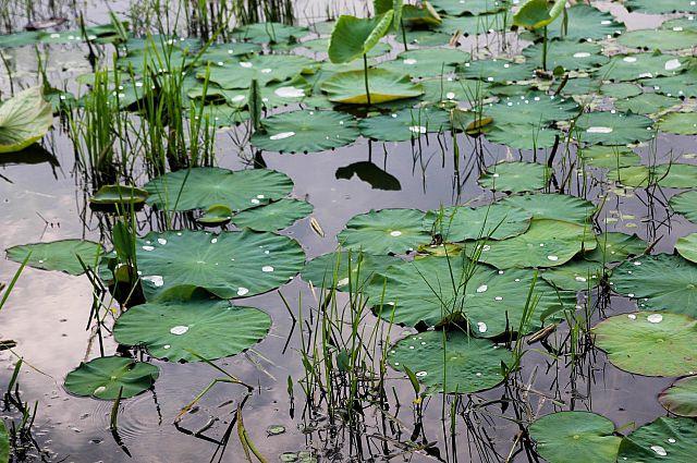 После дождя в природе наблюдается буйный рост.