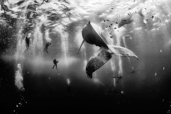 Обладателем гран-при фотоконкурса стал Ануар Патьянь Флориук из Мексики со своим фотоснимком подводного мира, сделанным на маленьком острове Рока Партида, Мексика