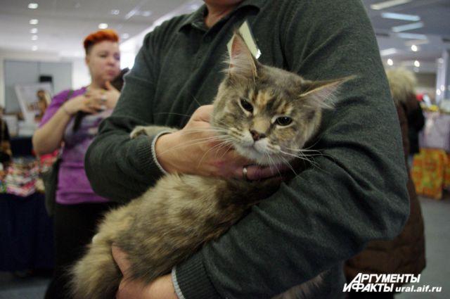 Екатеринбуржцам покажут самых низких и самых высоких кошек