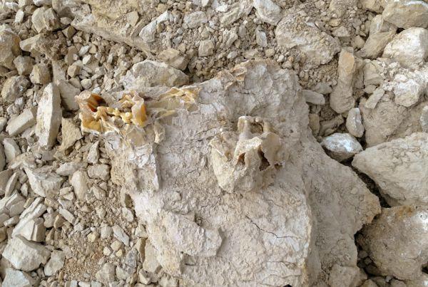 Вырванный ковшом обломок древней породы