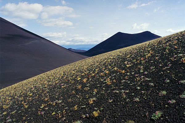 На месте извержения Толбачика 23 года спустя.