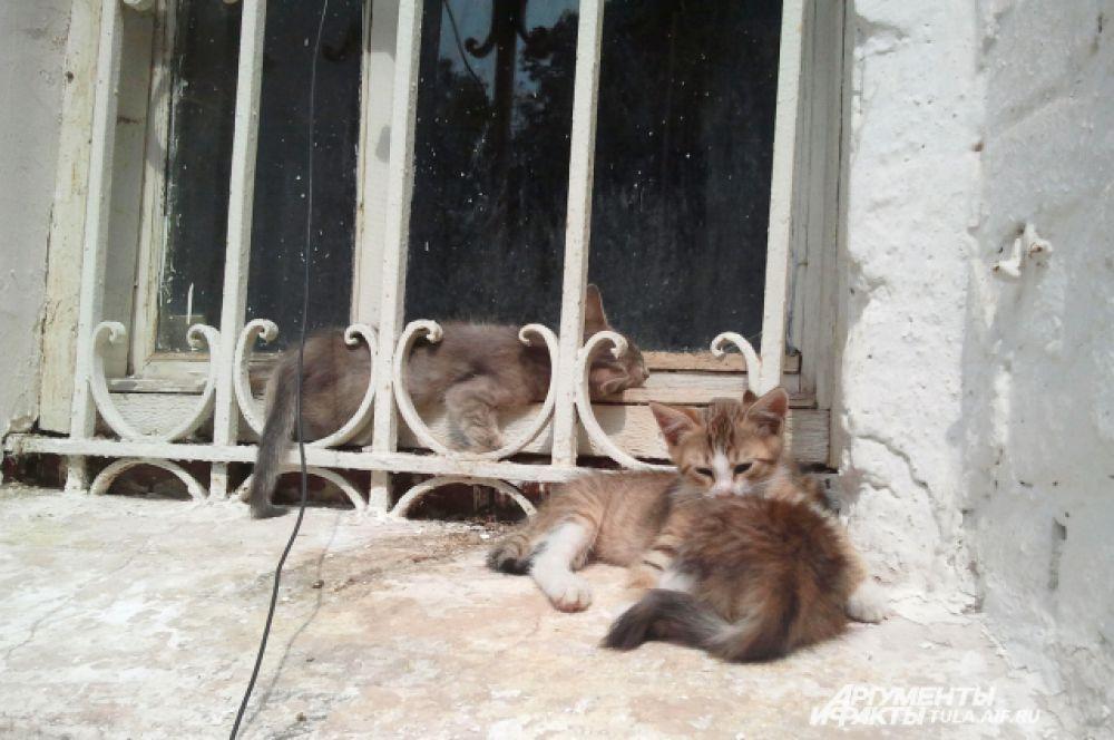 Эти котята родились и выросли около храма.