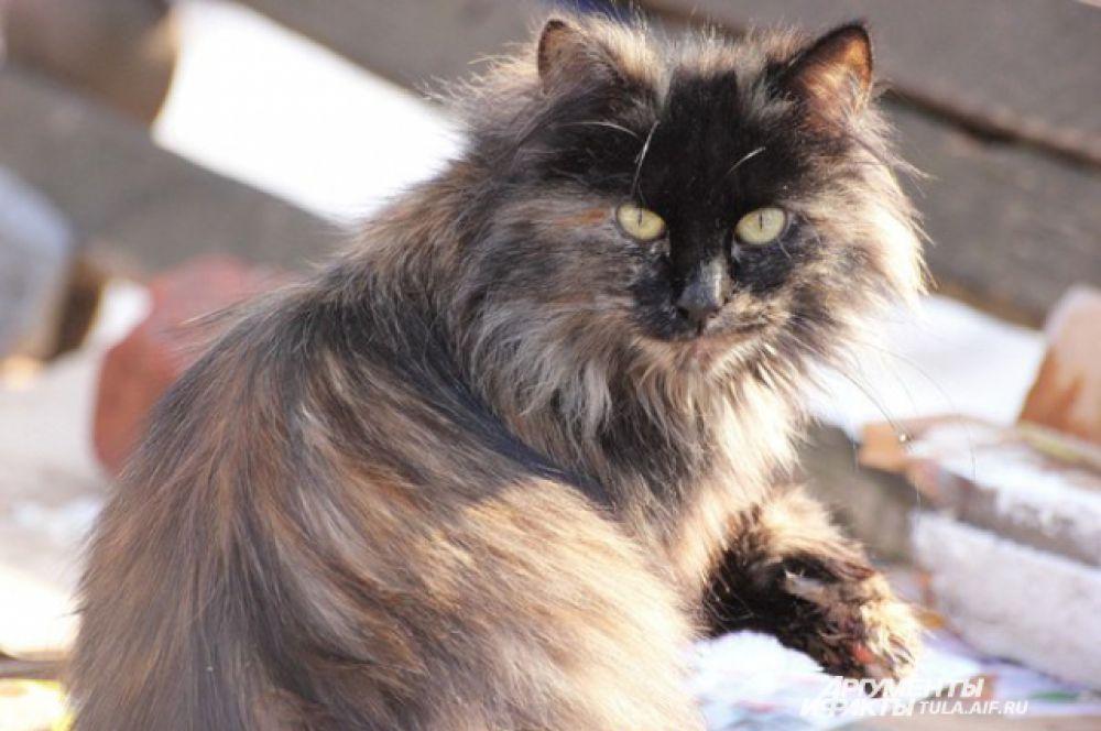Этот котик живет около подъезда дома на улице Калинина.