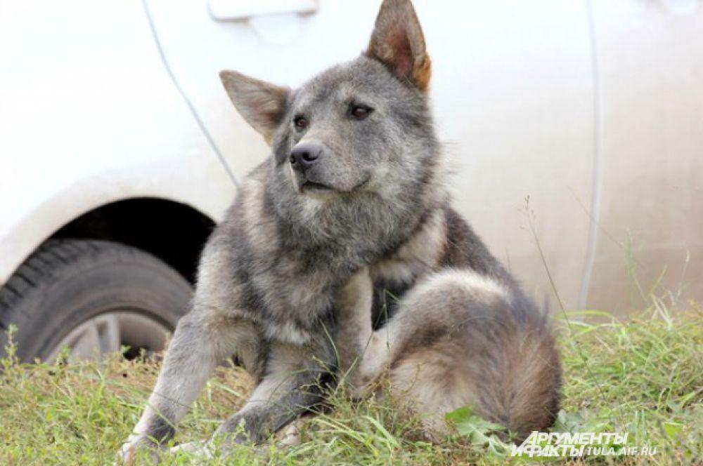 Эта собака нашла приют недалеко от поликлиники №4.