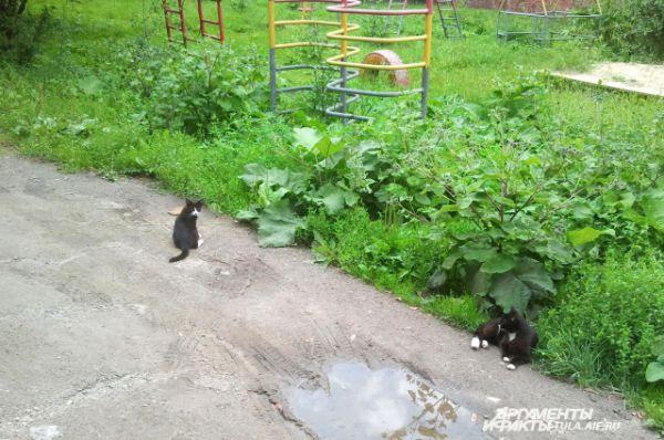 Эти котята живут во дворе на улице Вересаева.
