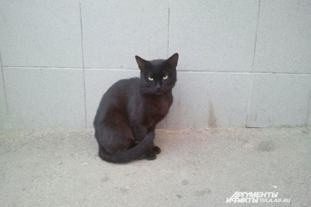 Этот кот приходит к магазину каждый день, ждет еды от добродетелей.