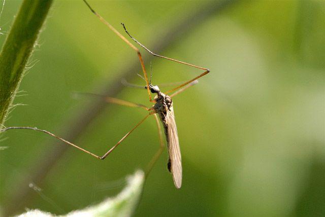 Средство от комаров на основе грибов разработали в Новосибирске