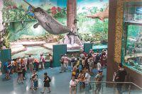 В 80 аквариумах живут обитатели вод со всего света.