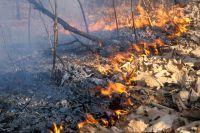 Из-за небрежности человека пострадал лес.