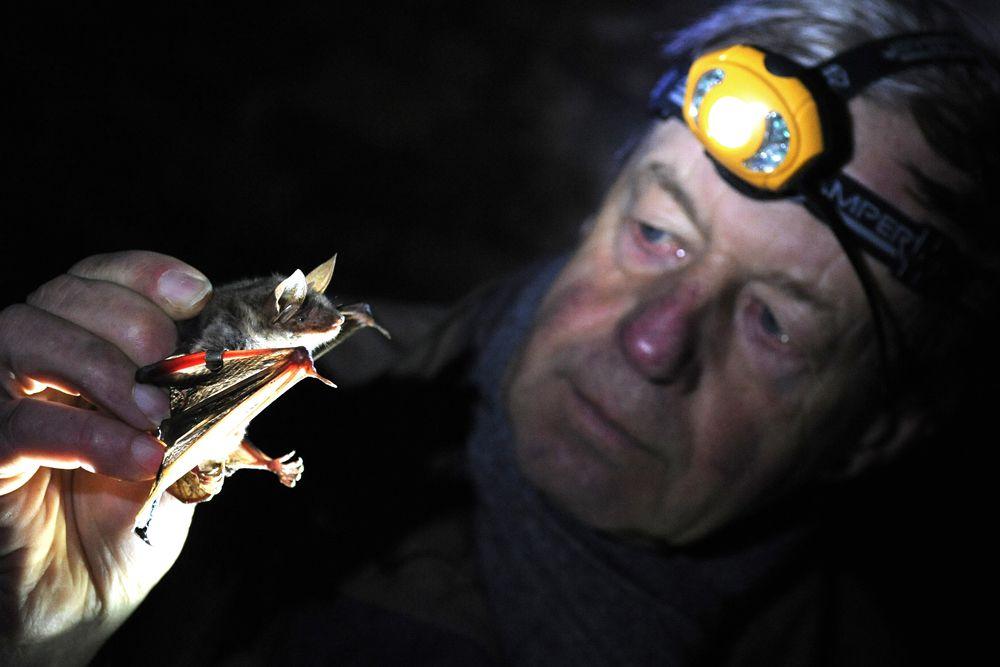 После бомбардировки Пёрл-Харбора стоматолога по имени Литл С. Адамс осенила идея. Он предложил привязывать зажигательные бомбы к летучим мышам и разбрасывать мышей над японскими городами. Специально для этих целей даже была разработана самая маленькая (17 граммов) авиационная бомба в истории.